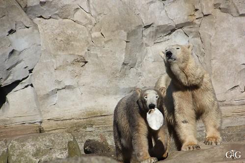 Zoo am Meer Bremerhaven 08.03.201531