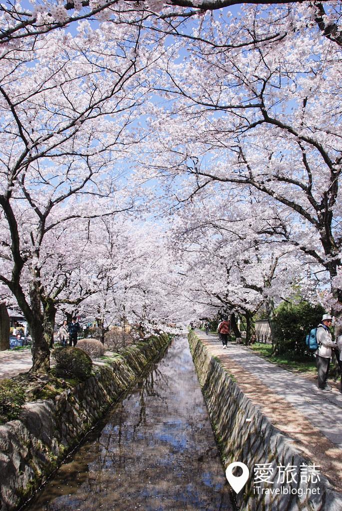 京都赏樱景点 哲学之道 14