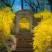 Dumbarton Oaks Park_R15_0561