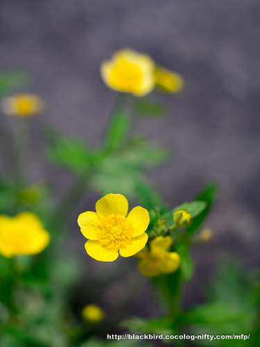 Flowers #02