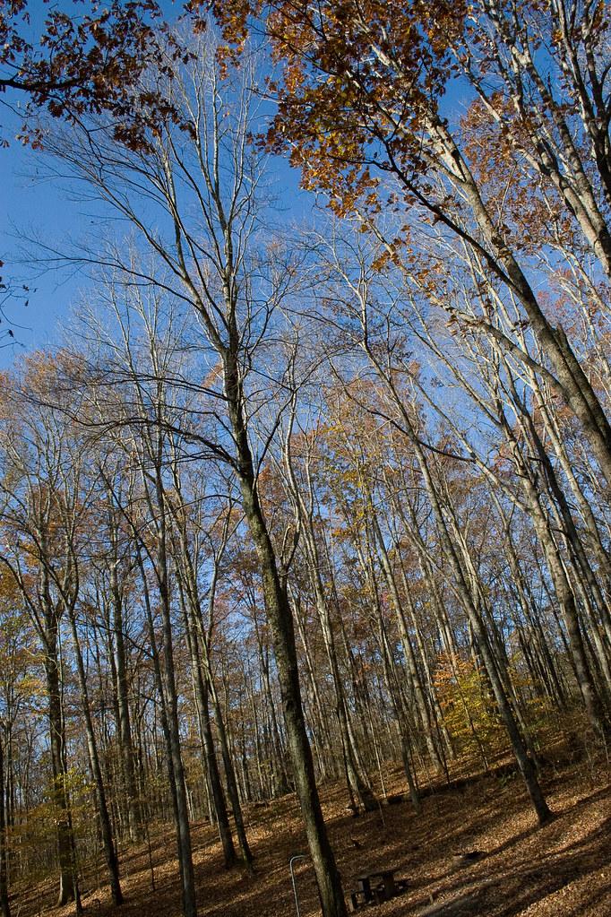 empty trees