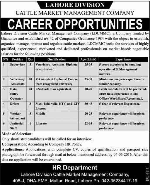 Catle Market Management Company Lahore Jobs