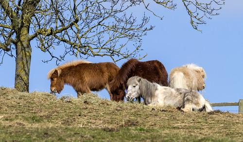 ponies 448 (55)