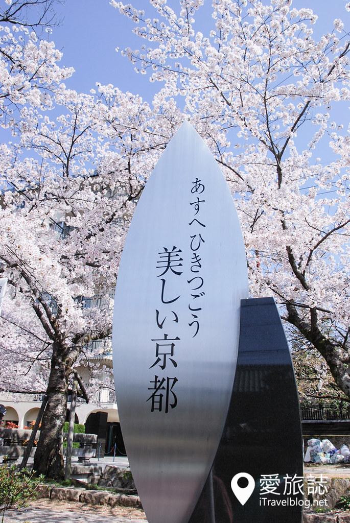 京都赏樱景点 哲学之道 41