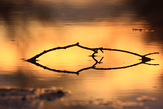 Reflecting in the Sunset