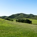 Hollenbeck Canyon Wildlife Area by maida0922