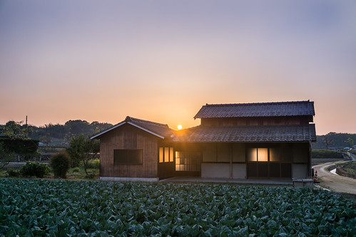 sunset house field japan landscape countryside spring sony shed cabbage 日本 crops 家 hdr goldenhour 夕焼け 春 畑 キャベツ 田舎 apsc a6000 lr5 sel1670z e1670mmf4zaoss α6000 ilce6000 lightroom6 ©jakejung