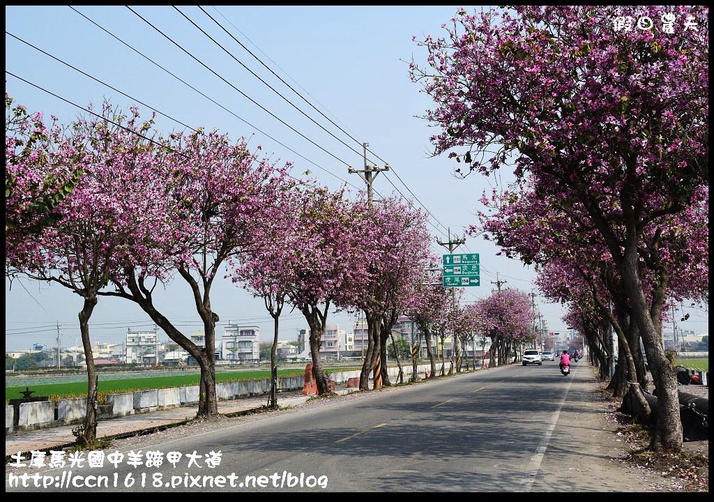 土庫馬光國中羊蹄甲大道DSC_1148