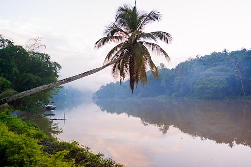 mist tree sunrise river srilanka kandy mahaweliriver concunt