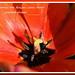 Spring comes: the flowers learn their colored shapes - Maria Konopnicka by ngawangchodron