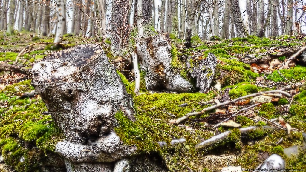 Im Märchenwald/In the fairy tale wood