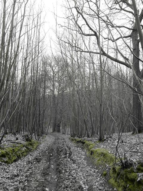 Path through coppice