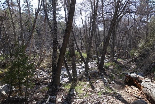 Holcomb Creek m292