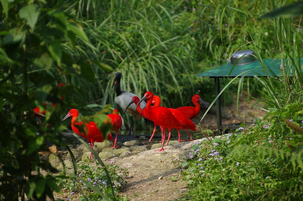 動物園弱弱的打鳥