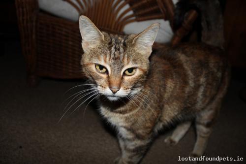 [Reunited] Thu, Apr 16th, 2015 Lost Male Cat - Enniscorthy, Rathnure, Wexford