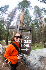 The Big Trees Trail