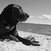 Jetson relaxing at Second Beach by T Power