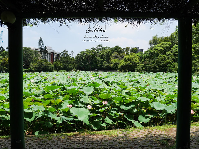 台北一日遊景點推薦植物園荷花蓮花池 (21)
