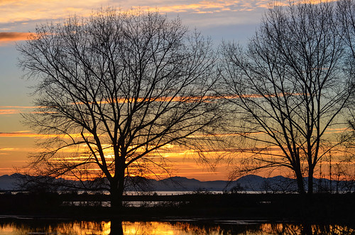 <p>Iona Beach Regional Park, Richmond, British Columbia, Canada<br /> Nikon D5100, 70-300 mm f/4.5-5.6<br /> February 22, 2015</p>