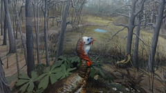 hunting(0.0), turkey(1.0), woodland(1.0), pheasant(1.0), fauna(1.0), forest(1.0), jungle(1.0), wild turkey(1.0), bird(1.0), wildlife(1.0),