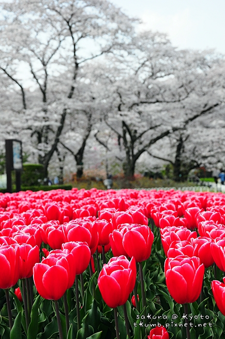 京都府立植物園 (6).jpg