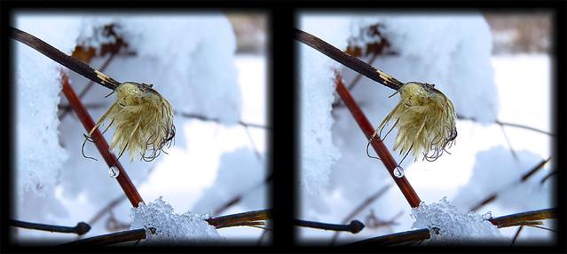 Winter Hanging On 6 - Cross-eye 3D