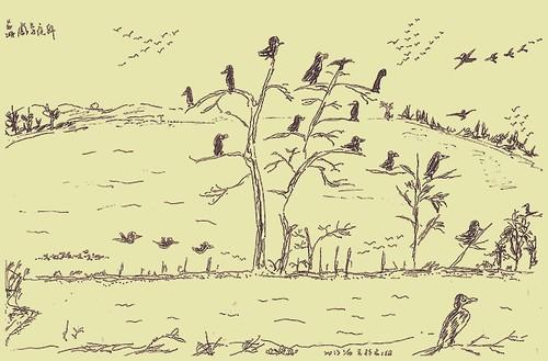 慈湖鸕鶿夜棲,繪圖:孫麗婷