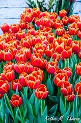Melbourne International Flower & Garden Show