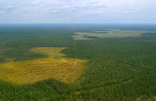 russia aerial aerialphoto wetland boreal mires komirepublic wetlandlandscape borealmire