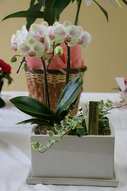 母の日は育てる楽しみを贈る! 鉢植えの花の贈り物