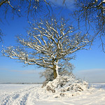 Winter Tree, Reading