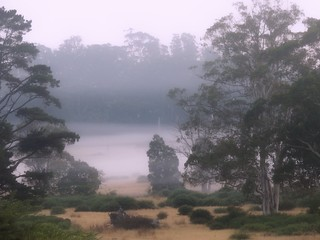 Misty morning - Ashbourne, country Victoria