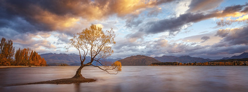 wanaka tree nz newzealand downunder lake sunrise sunset water waterscape landscape clouds light outdoor mountains southern alps southisland autumn colors world travel sky longexposure peaks town shore lonely island south 2015 famous place