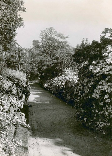 Azalea Walk, Royal Botanical Gardens (NSW)