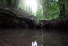 Im Wald (3)