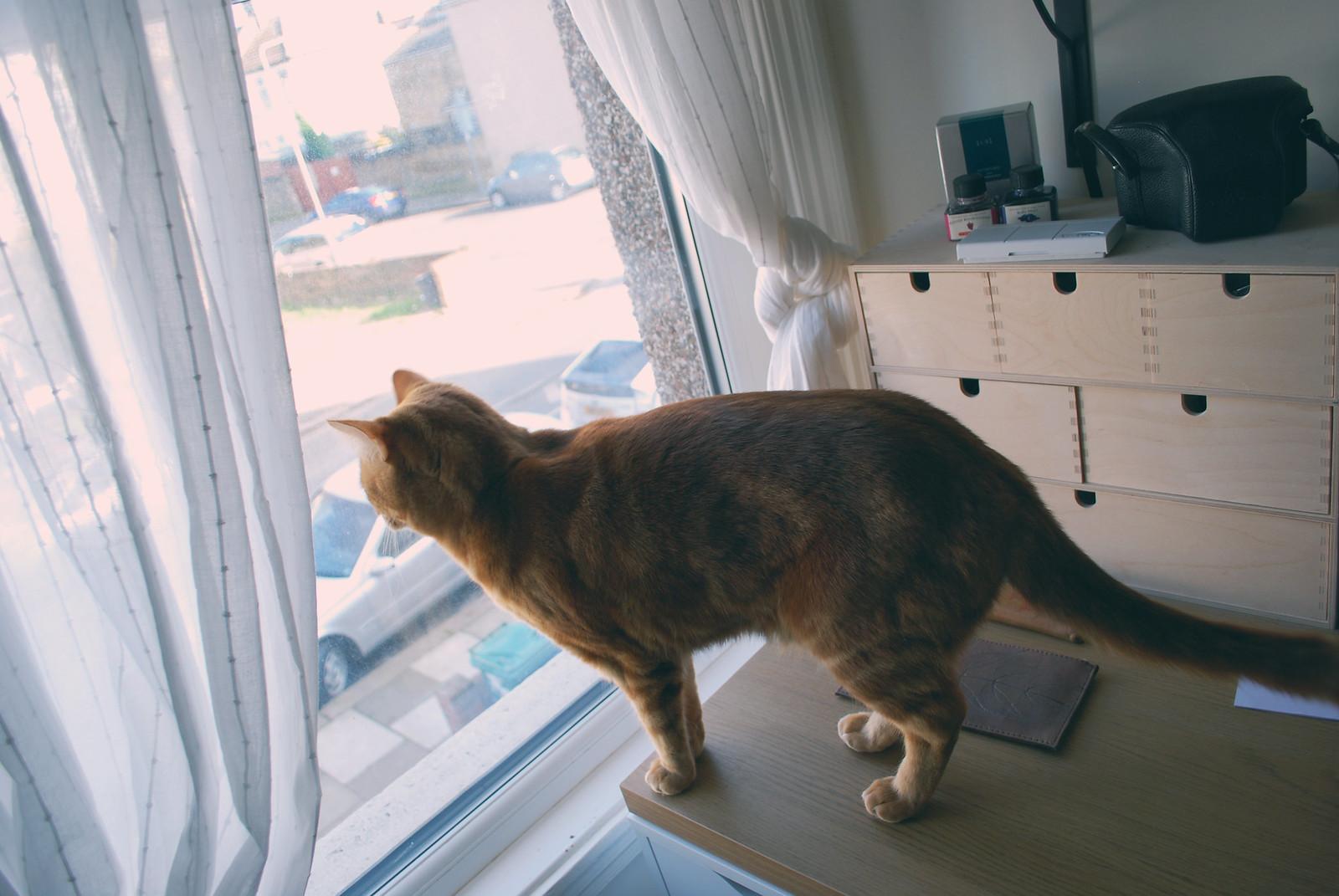 study cat literary feline