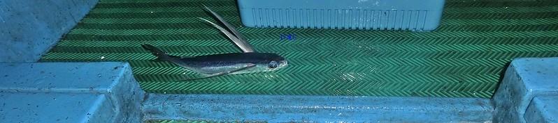 17度C環島-蘭嶼飛魚季體驗- (22)