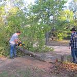 Tree down (4)