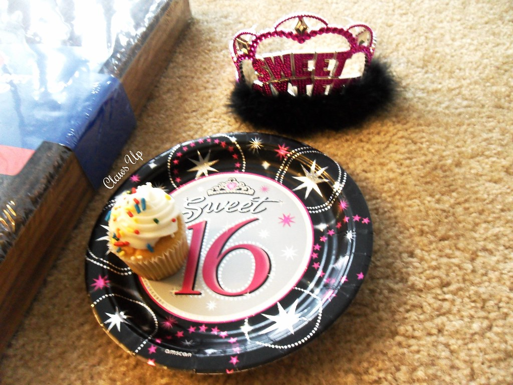 Sweet 16 birthday party for my cat