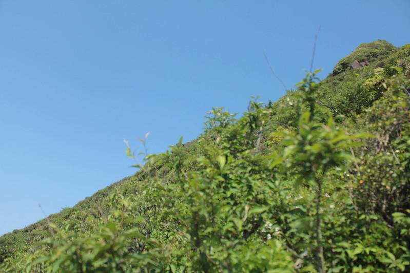 20140531-開聞岳-0363.jpg