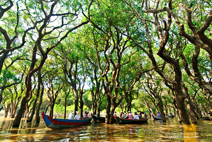 The Flooded Forest of Kompong Phluk in Siem Reap