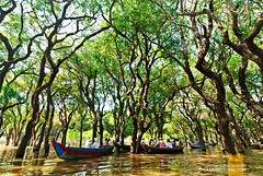 Flooded Forest, Siem Reap