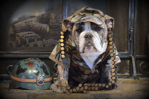 Army Bulldog