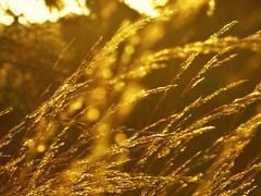 golden so golden