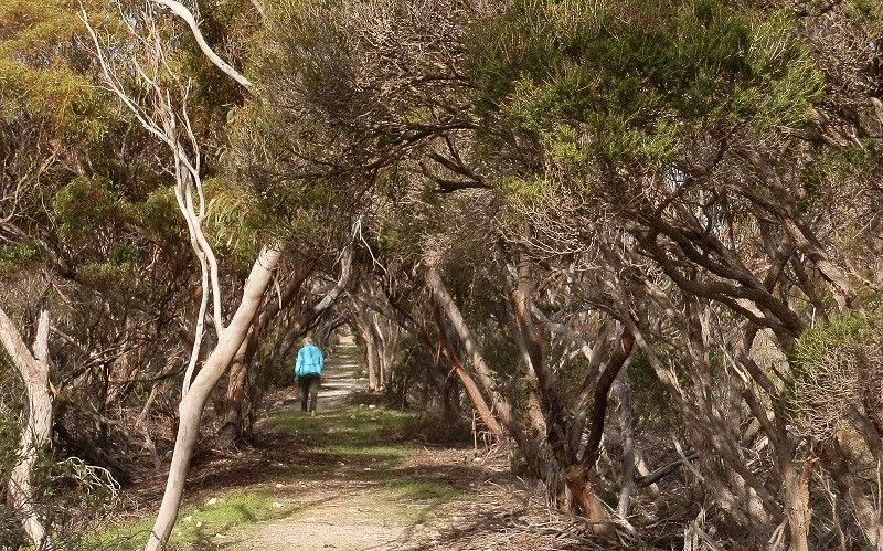 On the Thomas-Pfitzner Plaster Trail, Innes National Park