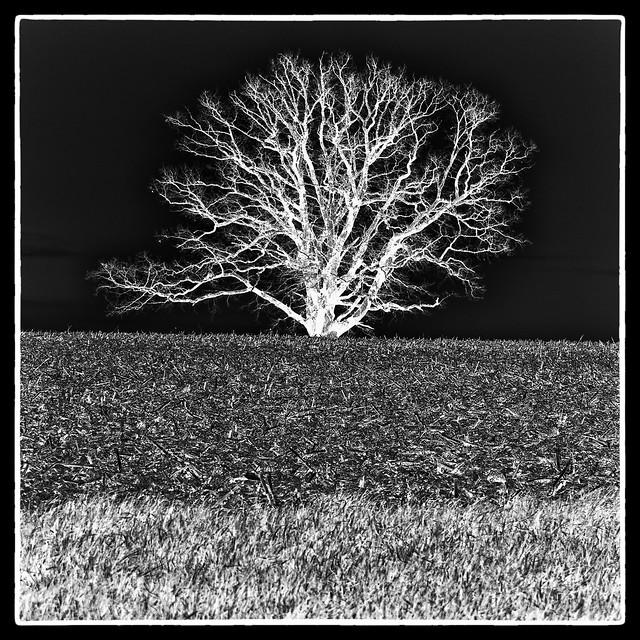 IMG_9062 Tree in Field Negative