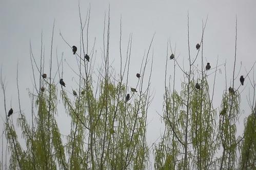 Concerto degli uccelli da pentagramma by Ylbert Durishti