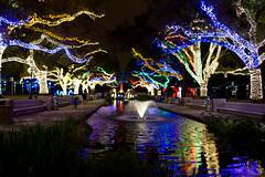 Zoo Lights 2014-3