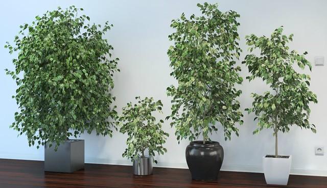 Lo dice la nasa estas son las plantas de interior que for Plantas grandes de interior resistentes