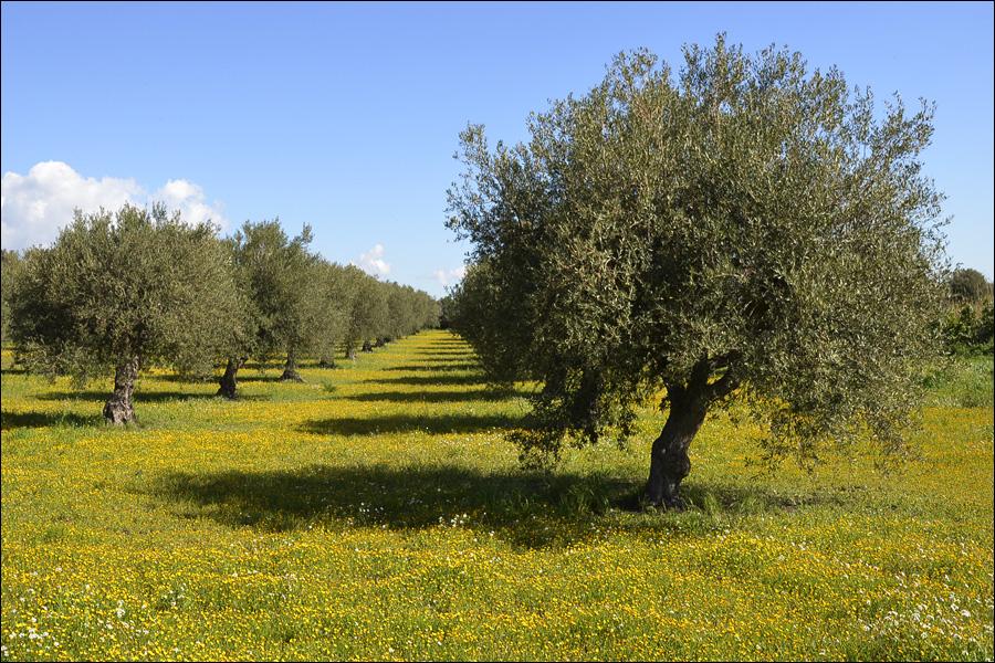 Sicilia_0112